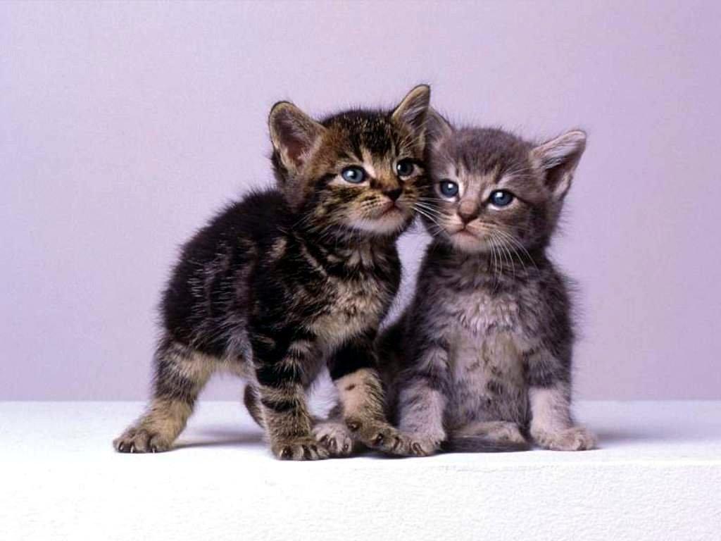 Un chaton emb te son copain buzz photo et video - Petit chaton gratuit ...