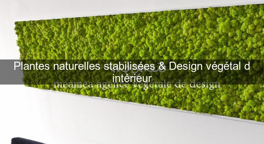Plantes naturelles stabilis es design v g tal d - Plante d interieur design ...
