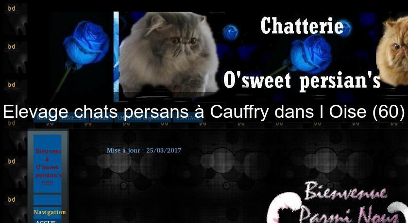 Elevage Chats Persans A Cauffry Dans L Oise 60 Eleveur