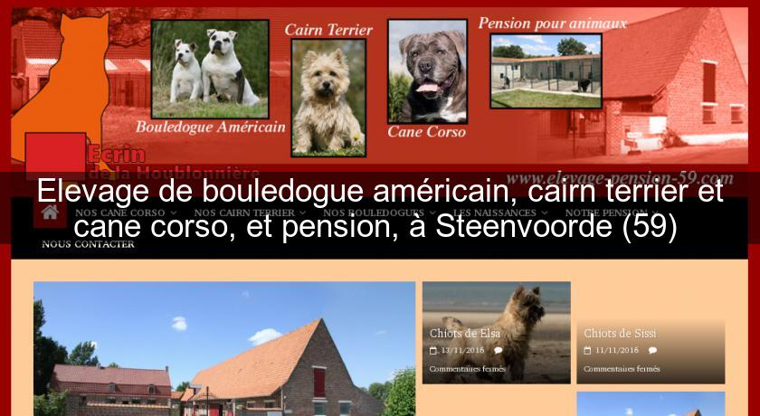 Elevage De Bouledogue Américain Cairn Terrier Et Cane Corso Et
