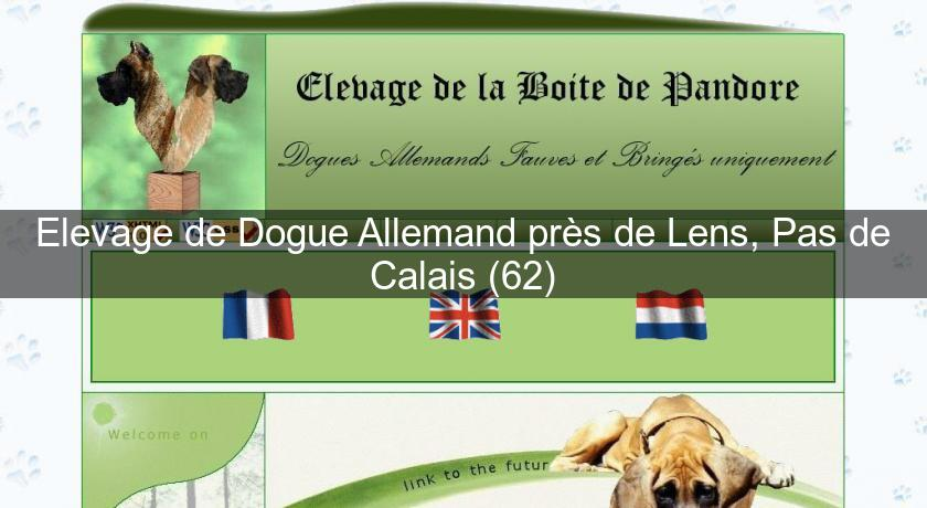 Elevage De Dogue Allemand Pres De Lens Pas De Calais 62 Eleveur