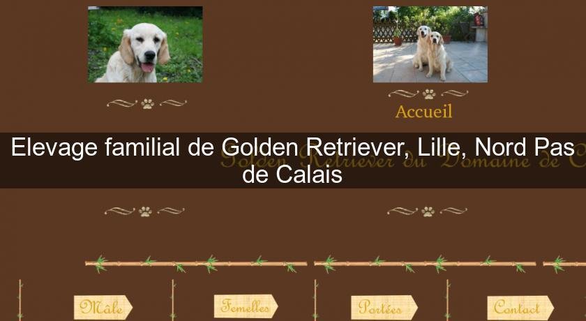 Elevage familial de Golden Retriever, Lille, Nord Pas de