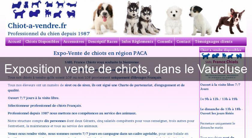 Exposition Vente De Chiots Dans Le Vaucluse Chien
