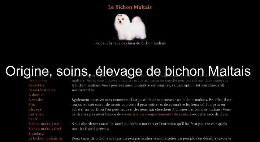 Origine Soins Elevage De Bichon Maltais Chien