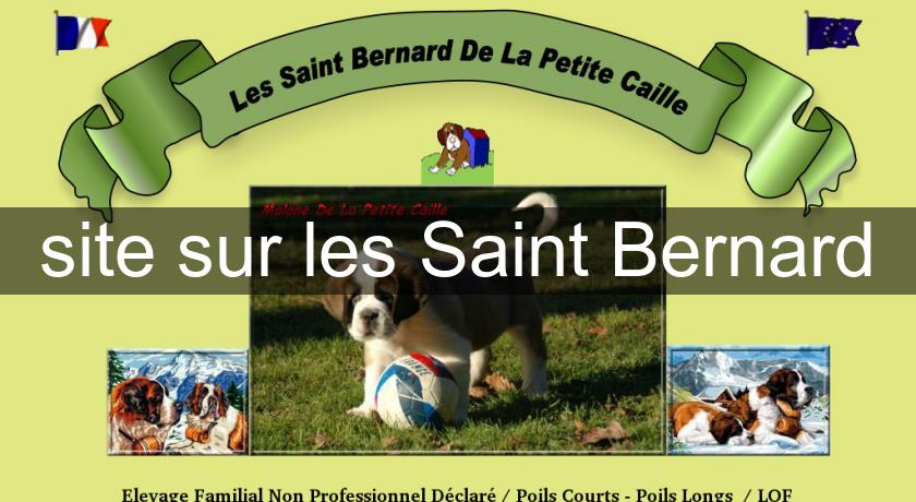saint bernard chat sites The saint bernard dog breed: the calm, easygoing saint bernard is gentle and patient around children, although he is not particularly playful he is devoted to his.