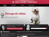 Elevage de Bobtails et Colleys à Jauldes en Charente (16)