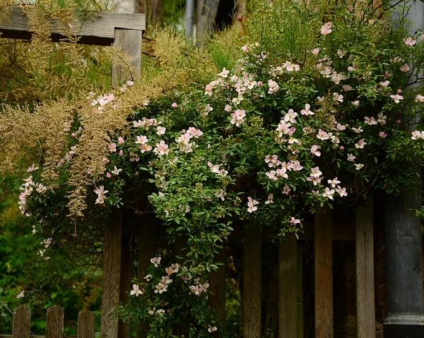 Arbre pour cacher vis a vis arbres et arbustes arbustes - Se cacher des voisins dans son jardin ...