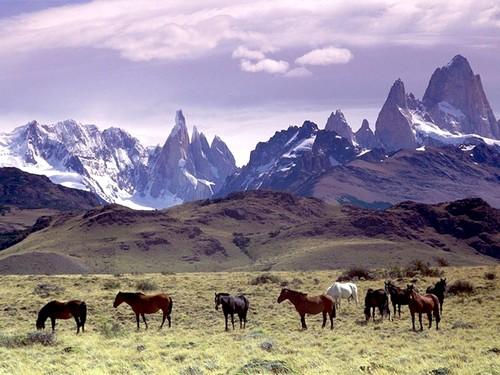 La patagonie une destination du bout du monde for Du bout du monde decoration