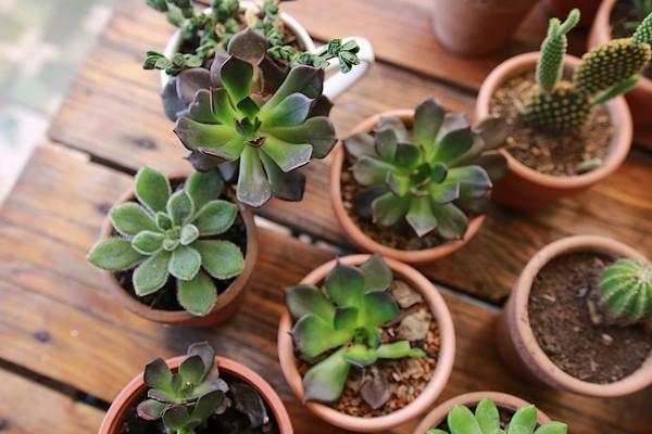 Faire un terrarium guide pratique - Plantes succulentes guide pratique ...