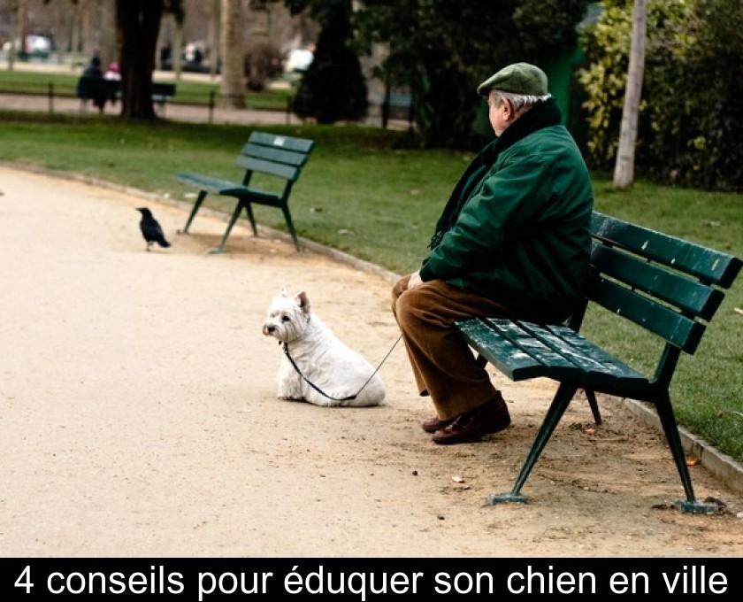 Collier Electrique Petit Chien - 15 techniques à savoir - Les bases de l'éducation canine - Tuto