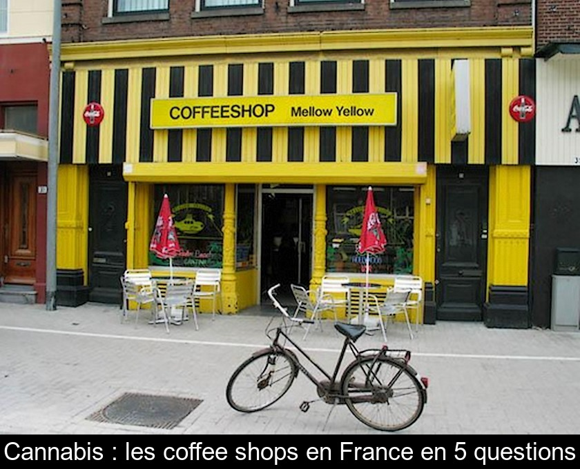 Cannabis : les coffee shops en France en 5 questions