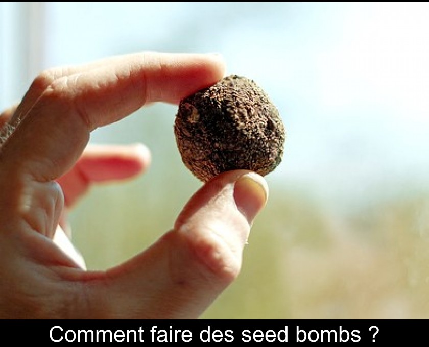 Comment faire des seed bombs ?