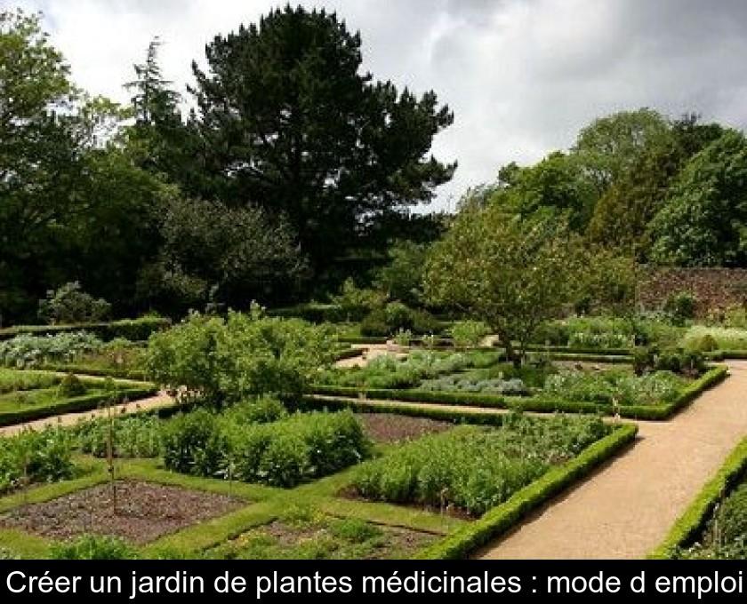 Créer un jardin de plantes médicinales : mode d\'emploi