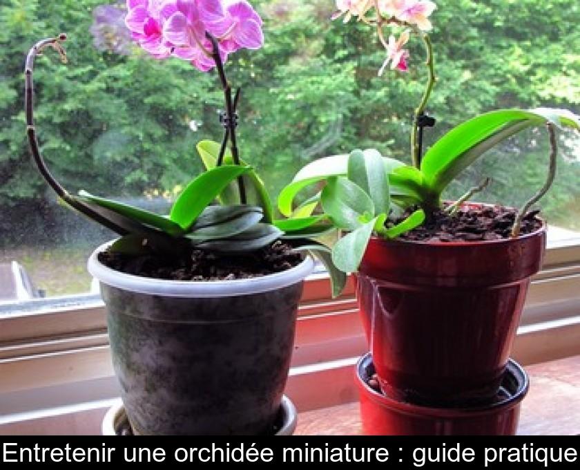 Entretenir Une MiniatureGuide Une Orchidée MiniatureGuide Pratique Orchidée Une Pratique Entretenir Entretenir E29WIDHY