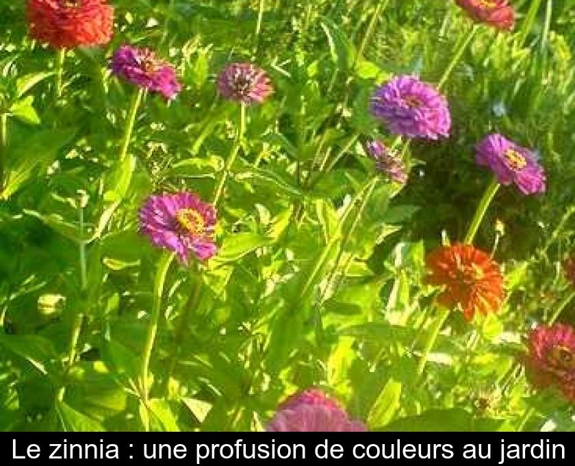 5271e5f743211 Le zinnia : une profusion de couleurs au jardin