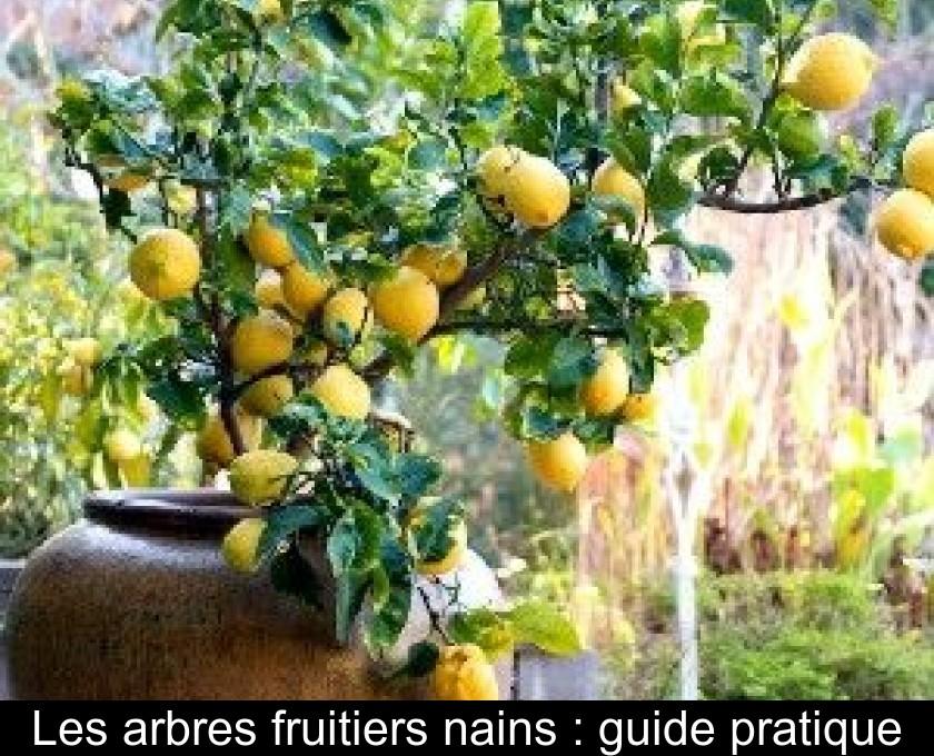 Les arbres fruitiers nains : guide pratique