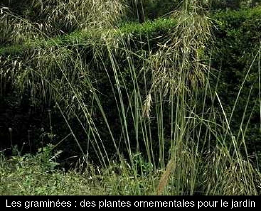 Les gramin es des plantes ornementales pour le jardin - Jardin de graminees photos ...
