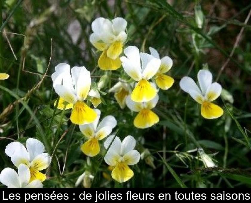 Les Pensees De Jolies Fleurs En Toutes Saisons