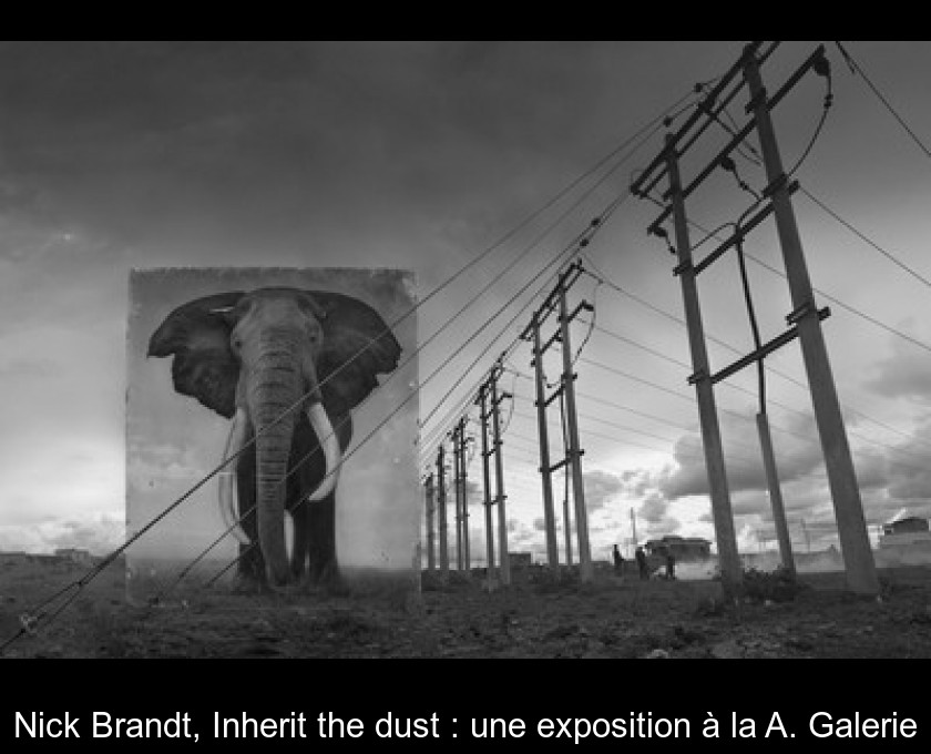 Nick Brandt, Inherit the dust : une exposition à la A. Galerie