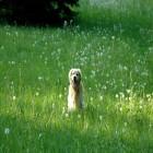 carte chien herbe
