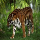 carte tigre jungle