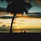 carte crepuscule et palmier