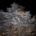 carte sapin neige noel