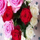 carte bouquet de roses