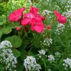 carte fleurs des champs
