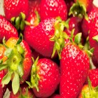 carte fraises