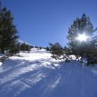 carte neige et pins
