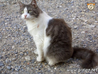 La chatte aux tresors 1984 restored - 5 2