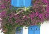 Photo Bougainvillier