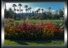 photo Les tulipes au parc Phoenix, Nice