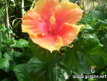Photo Une magnifique fleur Photos Fleurs Nice