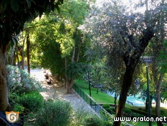 photo les arbres du jardin photos parcs et jardins nice. Black Bedroom Furniture Sets. Home Design Ideas