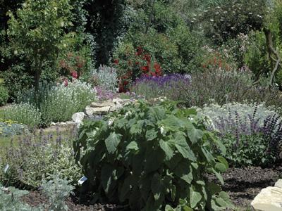 Jardin aux plantes parfum es la bouich re limoux for Jardin aux plantes