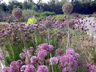 Jardin des plantes sauvages du conservatoire botanique for Plantes jardins