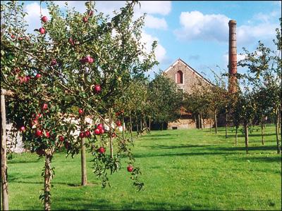 Jardin et verger de l'ecomusée- ferme du coulevrain savigny-le-temple
