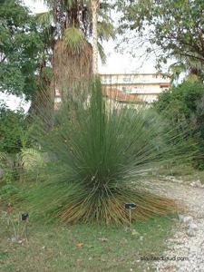 Le jardin botanique nice for Jardin botanique nice