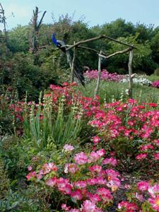 Les chemins de la rose dou la fontaine - Jardin de la rose doue la fontaine ...