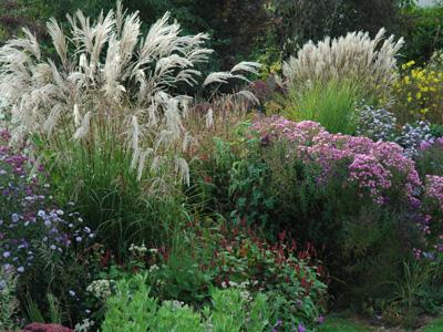 P pini re jardin antoine breuvart ramecourt for Plantes et jardins adresse