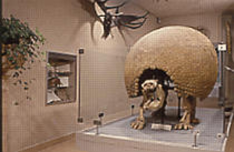 Muséum D Histoire Naturelle De Dijon Dijon