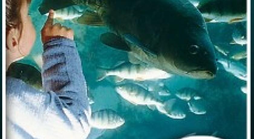 aquarium du p 233 rigord noir le bugue tourisme mus 233 e