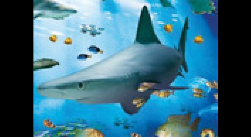aquarium sea val d europe marne la vall 233 e chessy tourisme