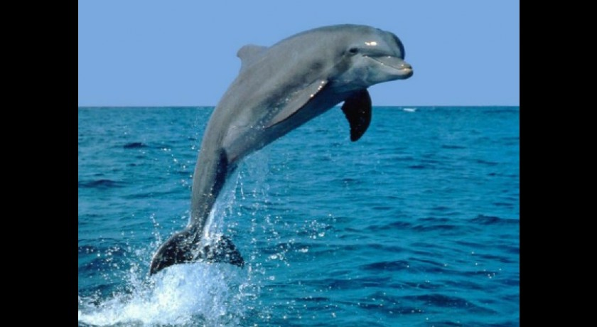 Favori Balade d'observation des baleines et dauphins Sanary-sur-mer tourisme QW82