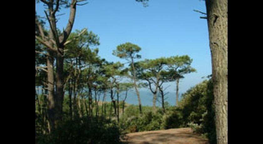 Foret de la pierre attelee saint brevin les pins tourisme - Saint brevin les pins office de tourisme ...
